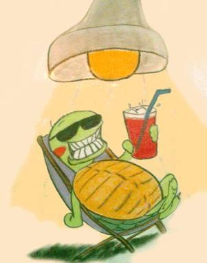 schildpad onder lamp